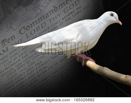 white dove perching in front of the ten commandments
