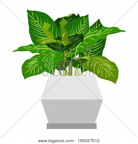 Dieffenbachia Houseplant. Home flowers made in flat style. Vector illustration.