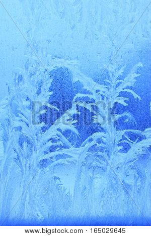 Blue background: frost patterns on a window pane