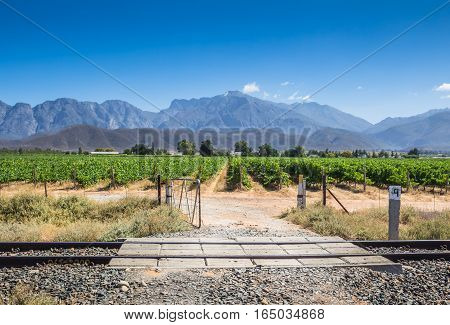 Open gate gravel road entrance to grape vines vineyard on a hot summer day in Western Cape South Africa