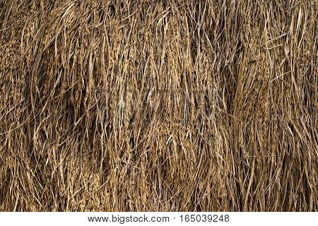 chaff straw background,Texture hay closeup in color. Fodder for livestock and construction material.