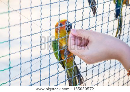 The Parrot Was Trapped In The Cage
