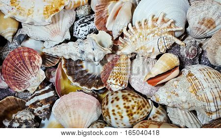 close up of variety of seashells on beach