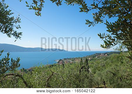 Mediterranean Landscape With Olive Grove At The Lake Shore Garda Lake