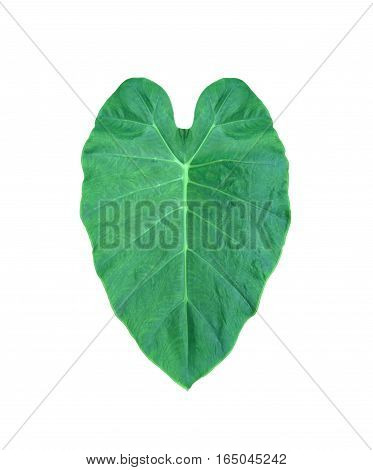 Green heart leaf from tropical in Asia