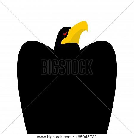 Black Eagle Head Isolated. Bird An Eagles Face On White Background