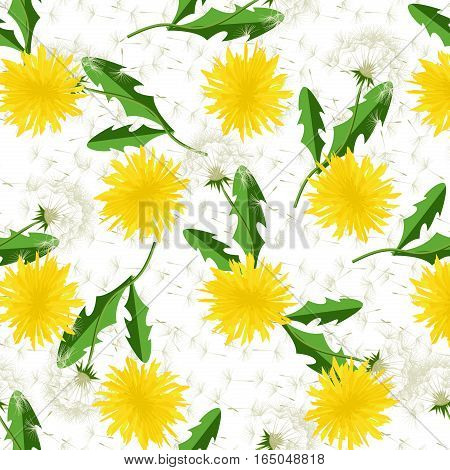 Seamless dandelion pattern. Vector seamless dandelion pattern background with hand drawn plants and seeds. Summer flower natural season beautiful blowing garden botany floral.