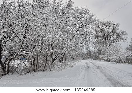 Country road in winter. Everything is covered with a layer of snow