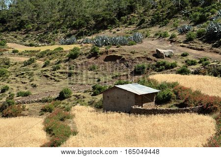 A Farm and grain fields in Ethiopia