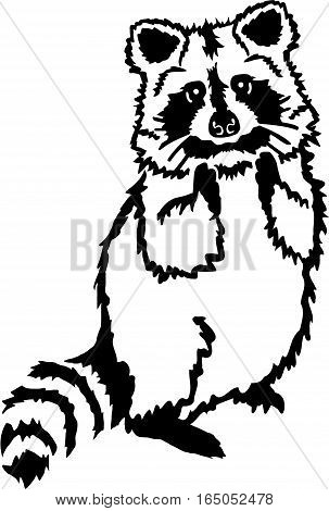 Cute raccoon standing with hands up animal