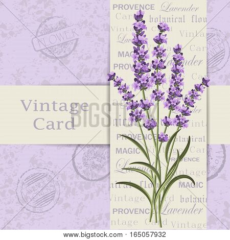 Beautiful lavender flowers for invitation card. Vintage postcard background. Vector illustration.