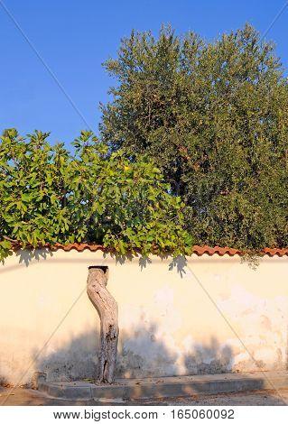 Wall build around tree in Italy Puglia