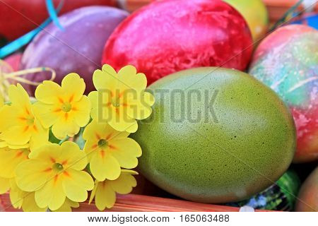 Easter eggs and yellow flowers close up