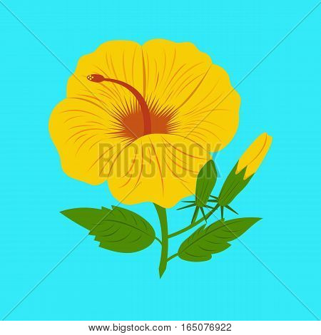 Hibiscus yellow vector on blue background Hibiscus yellow vector on blue background
