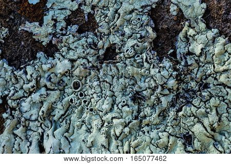 Lichens grow on a rock in Southern California.