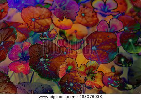 Abstract Image of Nasturtium Flowers in a Garden