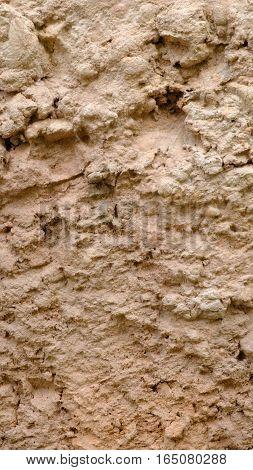 saline soil surface  in the big garden