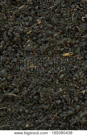 organic soils surface  in the big garden