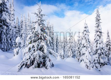 Decorated Christmas Tree in a Winter Landscape near the Village of Sun Peaks in the Shuswap Highlands of central British Columbia, Canada