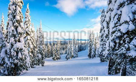 Glade Ski Slopes through the Winter Landscape on the Ski Hills at the village of Sun Peaks in the Shuswap Highlands of central British Columbia, Canada