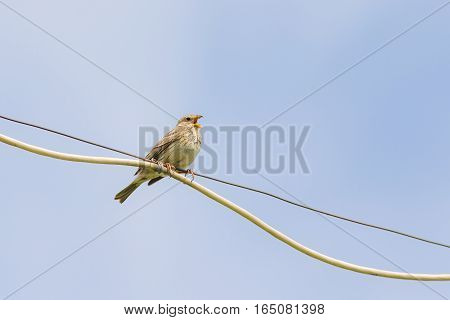 Small songbird on a wire against the sky