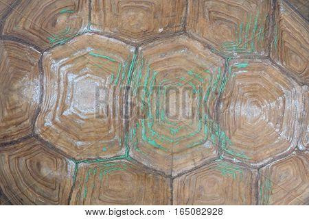 beautiful Tortoiseshell outdoor  in the big garden