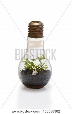 Terrarium in bulb shape on white background.