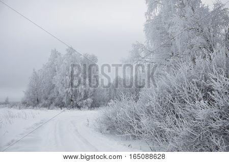 Winter white landscape - frozen snowbound trees