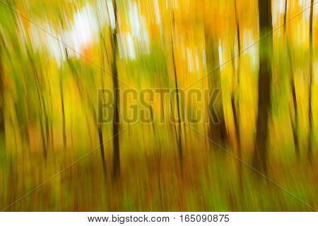 View of a woodland area using an abstract photography technique