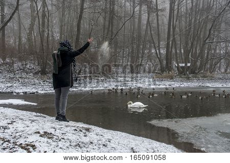 A young woman feeding on a lake swans and ducks Bird feeding in winter 8