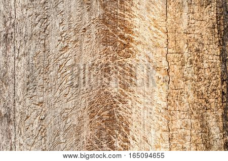 Tree trunk without bark closeup as wooden background