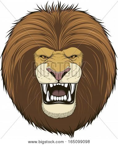 Vector illustration of a head fierce lion on a white background