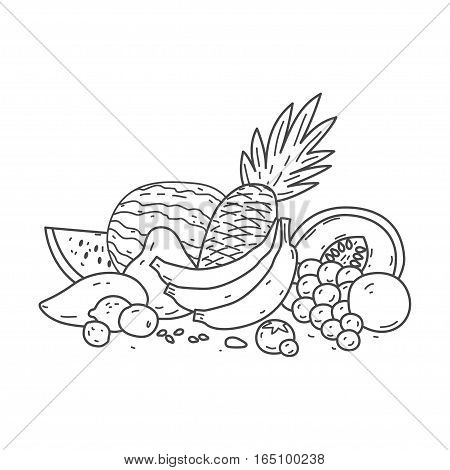 vector collection fruit, vector linear drawing logo