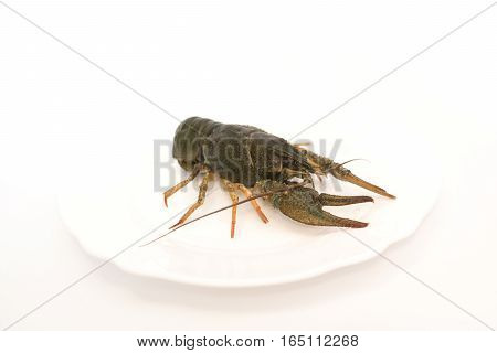 Live crayfish in a plate on a white background