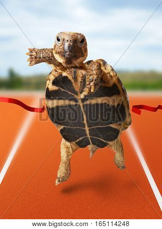 Little turtle runner wins by crossing the finish line on stadium