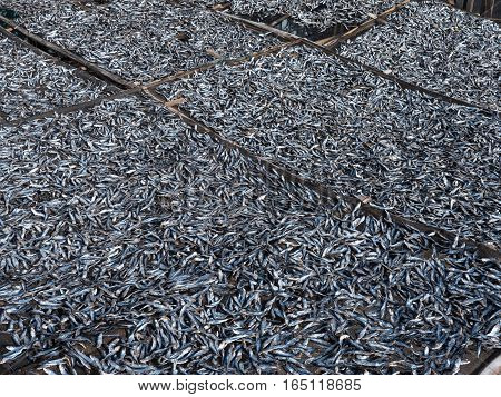 Small fish being dried in Tinoto a fishing village in Maasim the province of Sarangani on Mindanao the southernmost island of The Philippines.