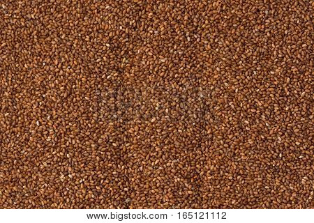 Background texture of Ethiopian, brown, Teff grains.