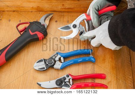 the gardener prepares the shears for pruning