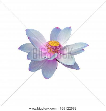Blue Nuphar Flower, Water-lily, Pond-lily, Spatterdock, Nelumbo Nucifera, Also Known As Indian Lotus