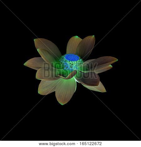 Invert Nuphar Flower, Water-lily, Pond-lily, Spatterdock, Nelumbo Nucifera, Also Known As Indian Lot