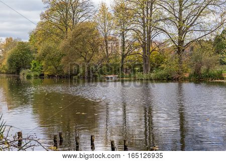 Autumn trees and reflections in the lake. Shot taken at The Glade Sidcup in November and shows lovely autumn colours and trees.