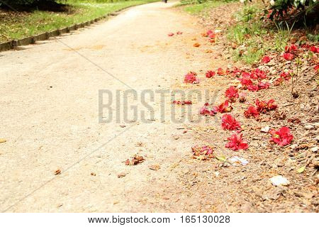 Empty dirt path with bright red flowers