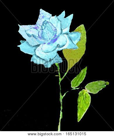 Hand painted picture, watercolors - blue rose on black background