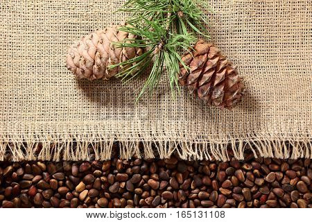 pine nuts, pine branches, cedar pine cone on a linen cloth