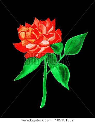 Red rose on black background, hand drawn painting watercolor