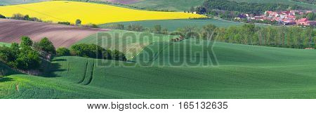 Panoramic view on spring fields. Landscape of sunny day in spring meadow. Beautiful spring background with green grass and blossom meadow.