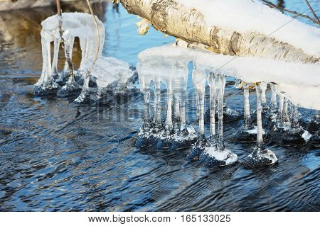 Icicles on tree branches above the freezing river