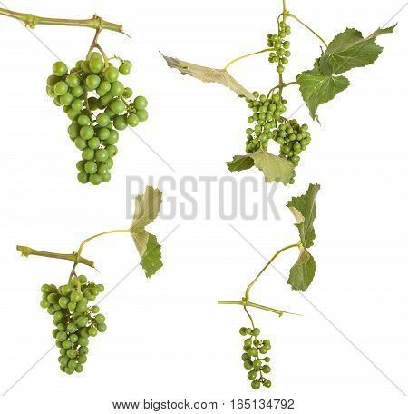 Not Ripe Grapes With Leaves Isolated On White Background