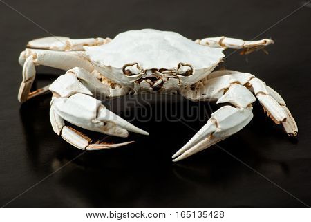 Small skeleton of crab on black background