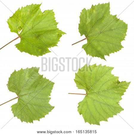 Green Grape Leaf. Isolated On White Background